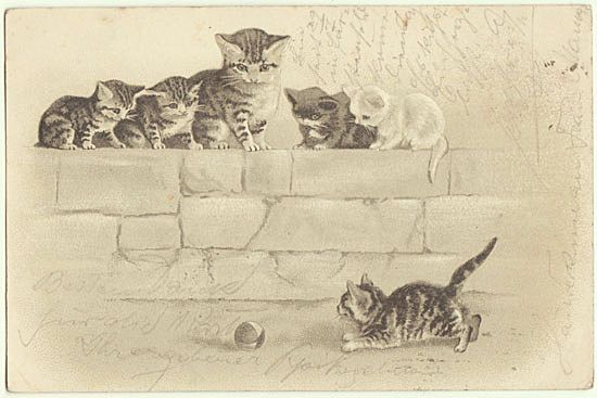 Kittens Cute Vintage Postcard from 1901