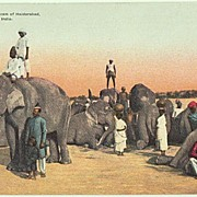 Old India: Elephants of a Nizam. Vintage Postcard