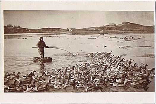 South China Photo Postcard: Man and his Ducks