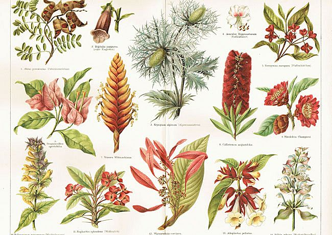 Reproductive Structures: Botanical Chromo Lithographs from 1898