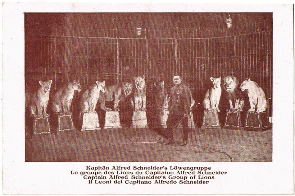 Two Circus with Lions, vintage Postcards