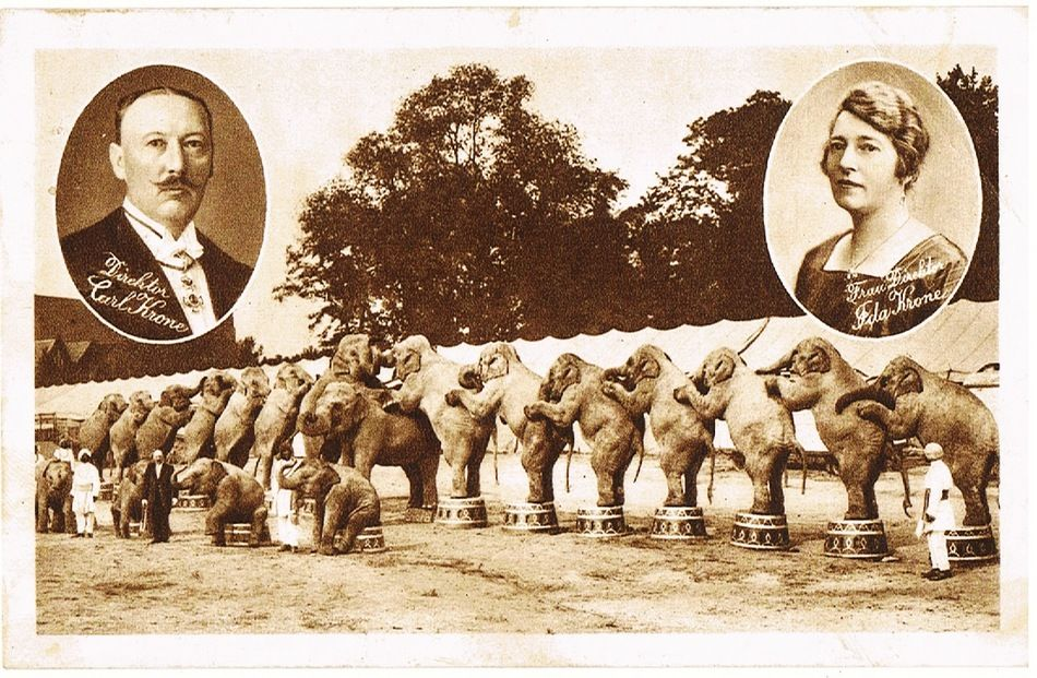 Circus with Elephants, vintage Postcard