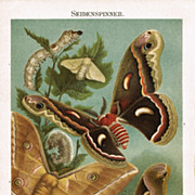 1898: Evolution of the Silk Worms. Old Chromo lithograph