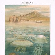 1898: Medusas. Old Chromolithograph