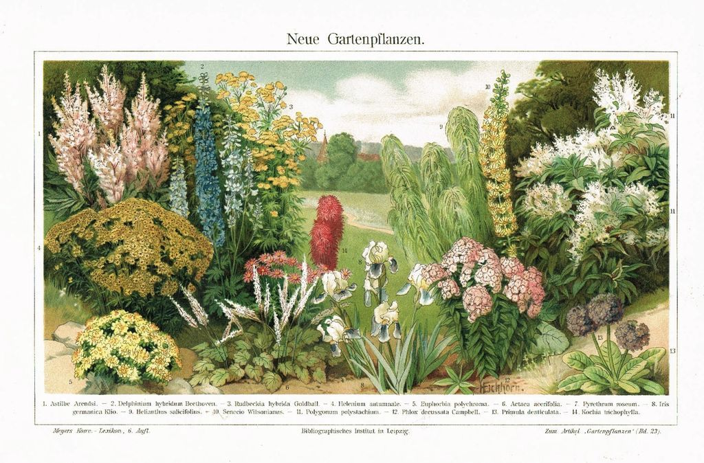 Garden Pants: Chromo Lithograph from 1902