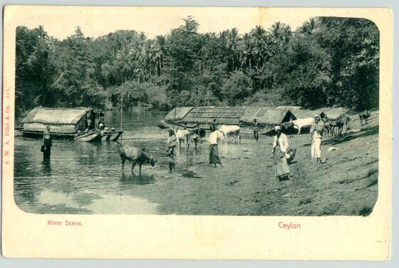 Old Ceylon Postcard: River Scene
