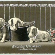 1904: Three little Dogs on a Vintage Greeting card