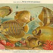 1889: Fish. Chromolithograph. Decorative.