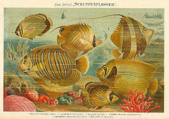 1889: Fish. Chromolithograph. Decorative.
