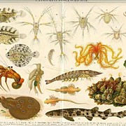 Evolution. Decorative Chromo Lithograph from 1900
