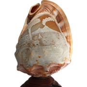 Italian Cameo Carved Conch Helmet Shell ...Electrified.