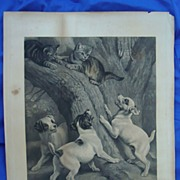 1850's Victorian Stone Lithograph Print~ Baffled Dogs Chasing Cat up a Tree