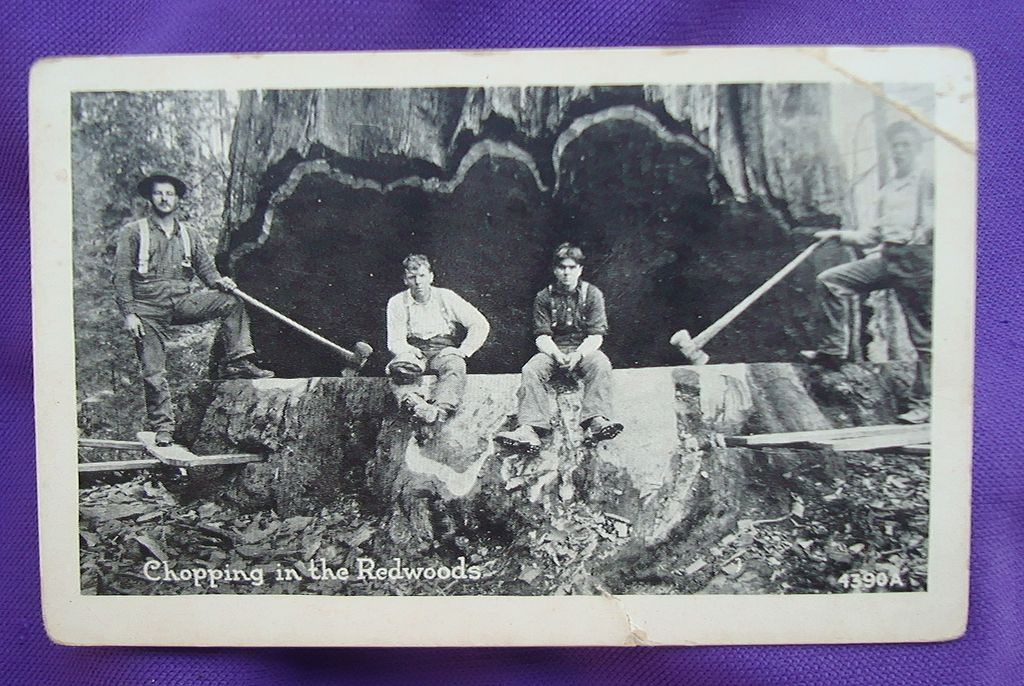 Original Photo of Lumberjacks Chopping Down Ancient Redwood Eureka,Ca.