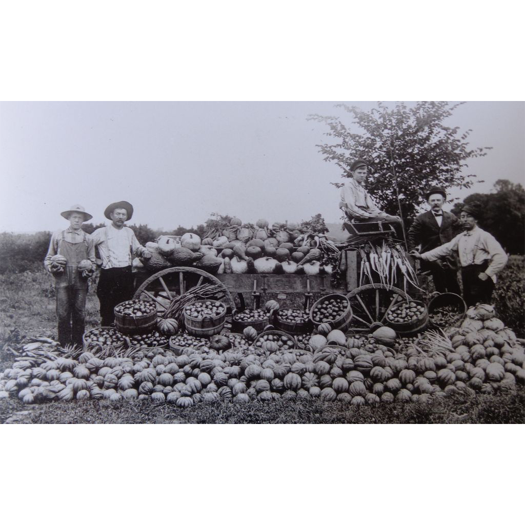 A GREAT Harvest~ Vintage Photo of Farmers with Pumpkins,Gourds  & Carrots