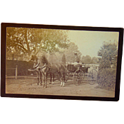 Biltmore Estate Asheville,North Carolina 1890's Photograph of Vanderbilt Family Carriage