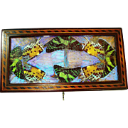 Victorian Butterfly Wing Inlaid Jewelry Box with Key