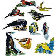 10 Vintage Scrapbook Cut-outs Birds, 8 with Latin Names