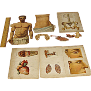 Vintage Male Anatomical Model