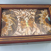 Vintage Brazilian butterfly Wing Inlaid Wood Box