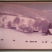 Color Photograph: Winter Cattle heading to home at the end of a winter's day (Artist signed)