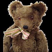 Fabulous Cocoa Brown Mohair Vintage Teddy Bear Glass Eyes Knickerbocker