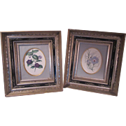 Pair Old Floral Prints In Black Carved and Gold Gilt Frames