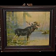 Antique Bull Moose Print Circa 1910