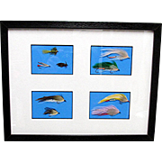 Fly Fishing Flies Framed
