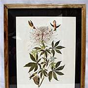 Hummingbird Audubon Print Framed 50% OFF