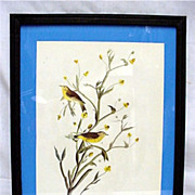 Bird Print  Audubon Yellow Palm Warbler Framed