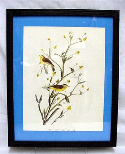 Yellow Palm Warbler  Audubon Print Framed