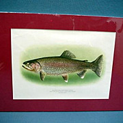 Rainbow Trout Lithograph Print Signed Fly Fishing Art Mint