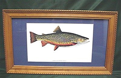 Trout Print Framed