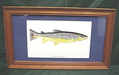 Brown Trout Fish Print Framed