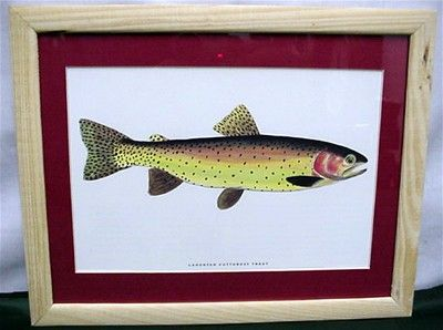 Cutthroat Trout Print Framed 50% OFF