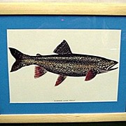 Lake Trout Fish Print Framed 50% OFF