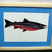 50% OFF Arctic Char Framed Fish Print