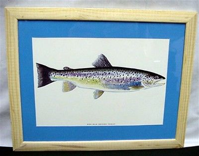 Sea Run Brown Trout Framed Fish Print 50% OFF