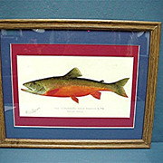 Denton Signed Print of Canadian Red Trout Framed