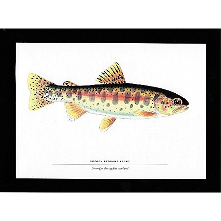 Fish Print Oregon Redband Trout