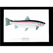 Fly Fishing Print Steel Head Trout