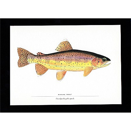 Fish Print Apache Trout