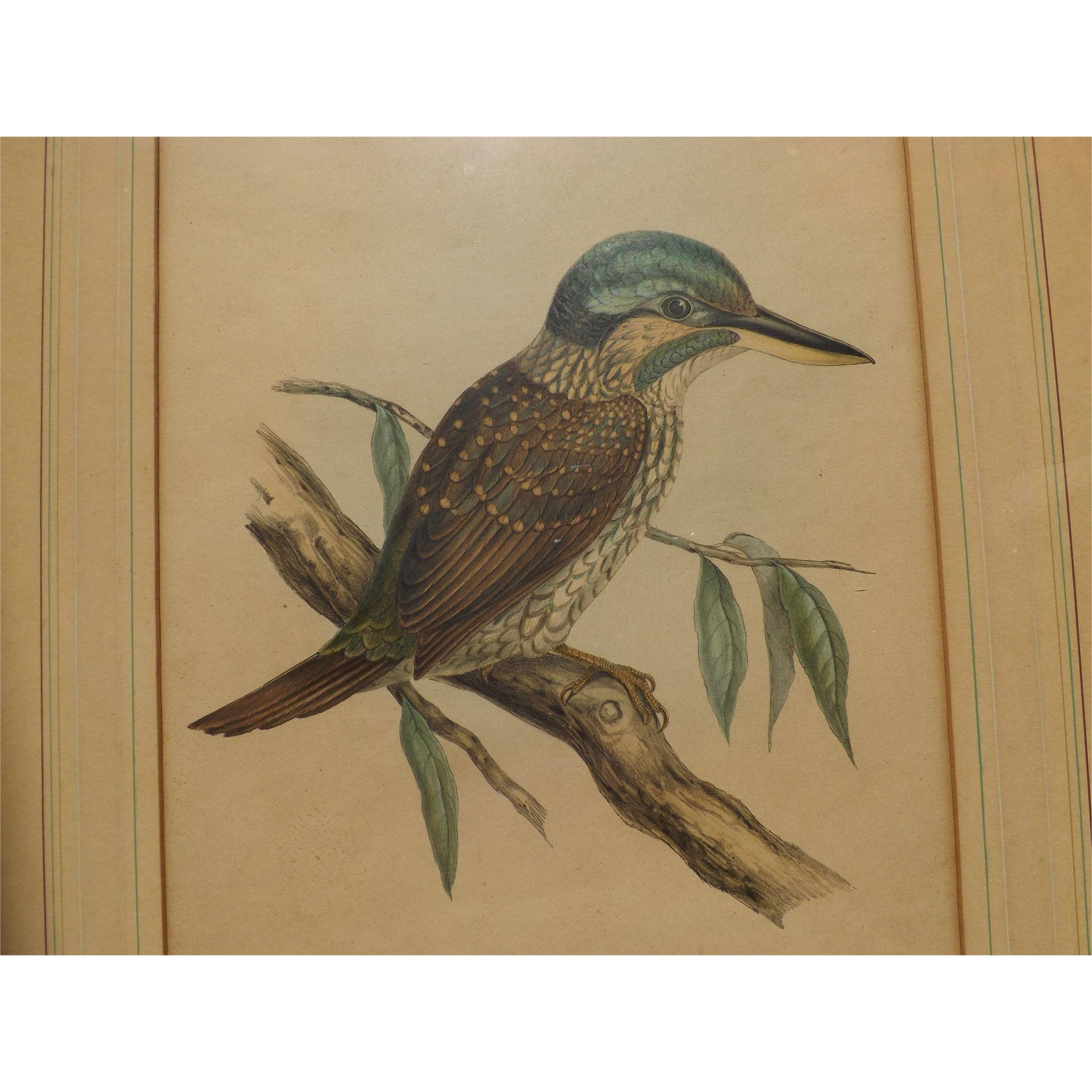 Antique Bird Print - Hullmandel & Walton hand colored lithograph Halcyon