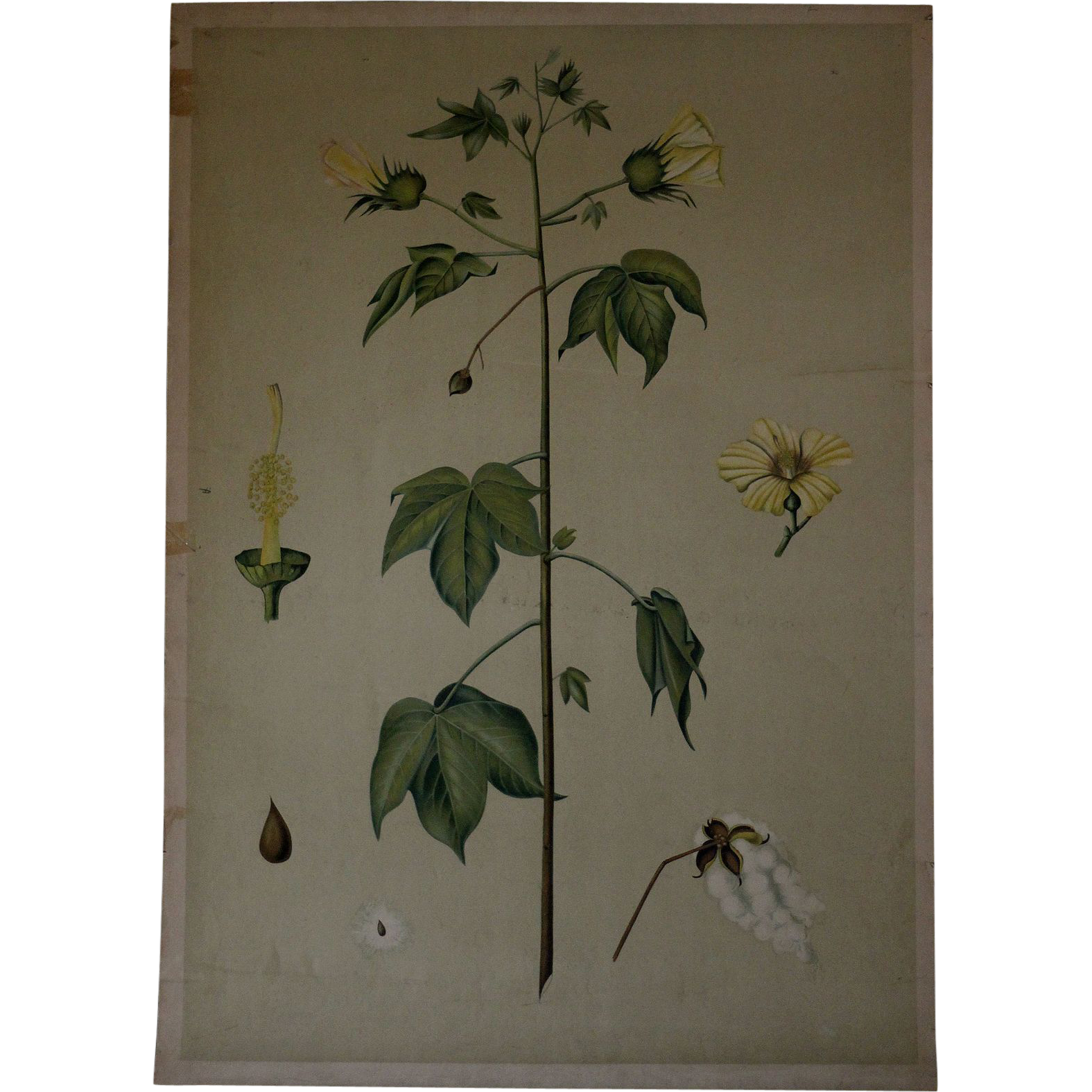 Antique Czech Botany School Teaching Chart - 19th Century Botanical Poster