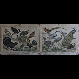 Antique German Natural History / Zoology / Biology School Teaching Charts - 19th Century Gamebird  Engravings
