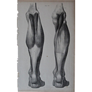 Antique 1836 English Anatomical Lithoghraph Print - Human Body / Muscles / Physiology Plate 38