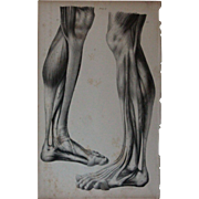 Antique 1836 English Anatomical Lithoghraph Print - Human Body / Muscles / Physiology Plate 37
