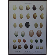Vintage 1940s Danish Botanical SEED Chart -Ellen Backe School / Botany / Biology / Teaching Chart Print #1