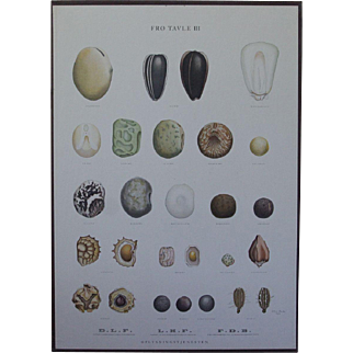 Vintage 1940s Danish Botanical SEED Chart -Ellen Backe School / Botany / Biology / Teaching Chart Print # 3