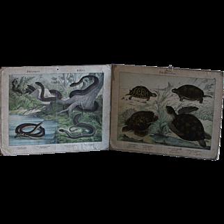 Antique German Biology School Teaching Charts - 19th Century Natural History  Engravings